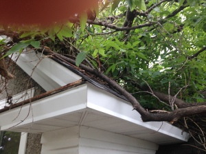 Broken limbs on a house due to high winds and included bark.